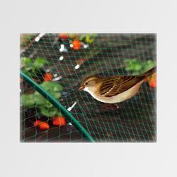 Síť proti ptákům M200 2x20m Zelená